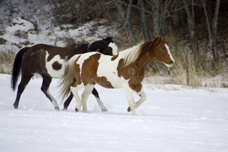 Pferden-Zusammenfassung stockfoto