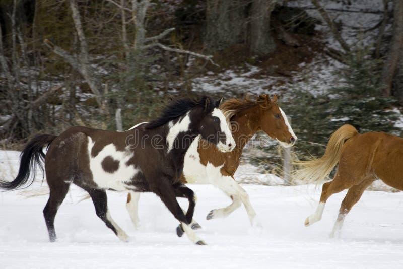 Pferden-Zusammenfassung lizenzfreie stockfotos