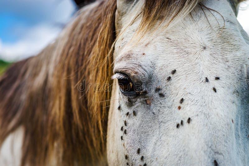 Pferdenahaufnahmeporträt auf Weide, Sommertag lizenzfreie stockfotografie