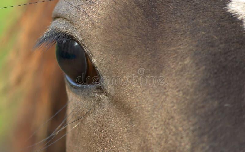 Pferdenauge lizenzfreie stockfotografie