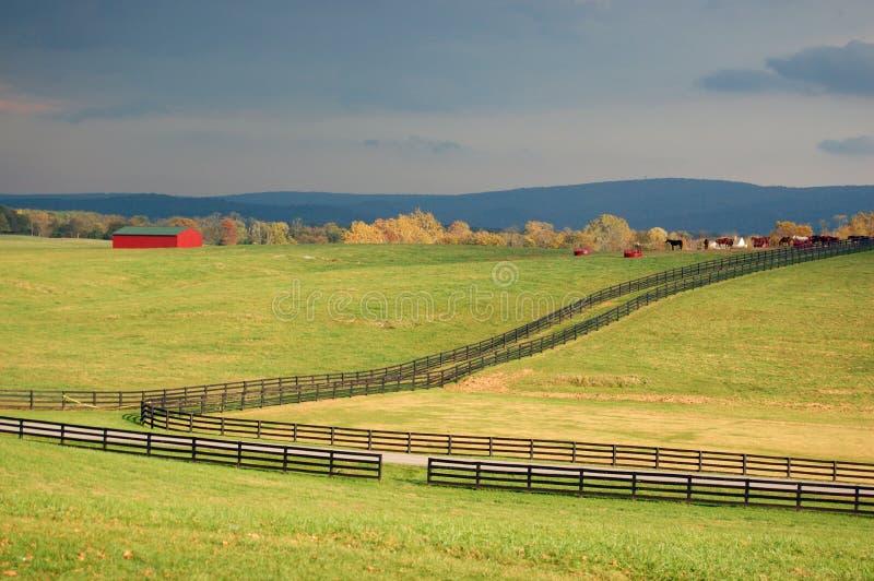Pferdenbauernhof in Virginia lizenzfreie stockfotos