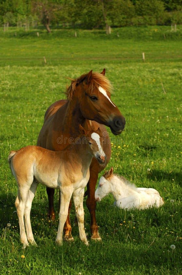 Pferdenfamilie stockbild