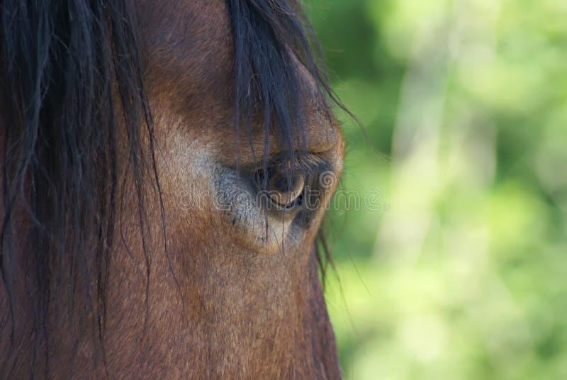 Pferdenflüchtiger blick stockfotos