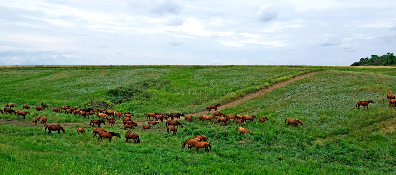 Pferdenherde. lizenzfreie stockbilder