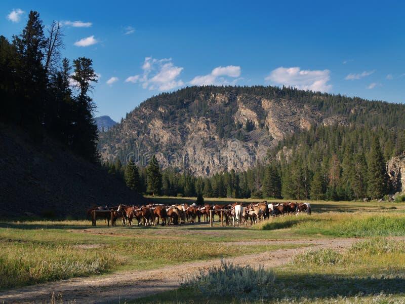 Pferdenherde auf Grasland stockfotos