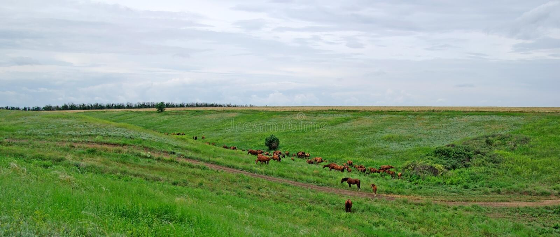 Pferdenherde in der Steppe. lizenzfreie stockfotos