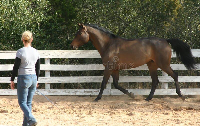 Pferdenkursleiter 2 Lizenzfreie Stockfotos
