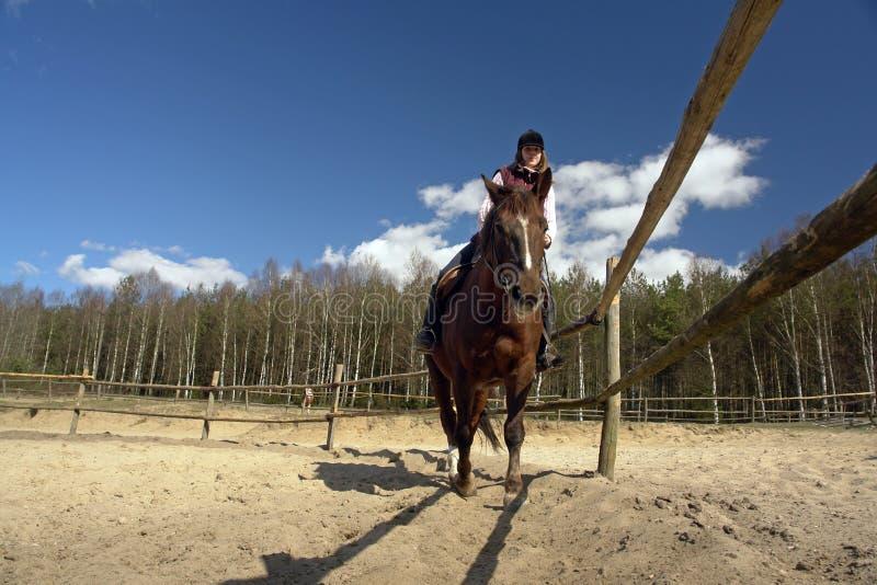 Pferdenmitfahrer stockfoto