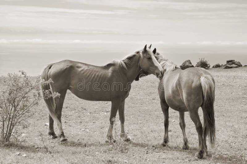 Pferdenpaare lizenzfreies stockfoto