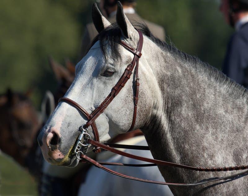 Pferdenportrait lizenzfreie stockfotos