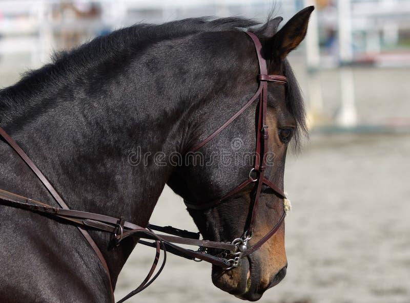 Pferdenportrait lizenzfreie stockbilder