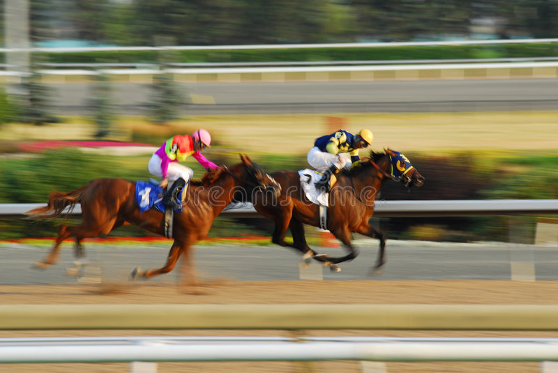 Pferdenrennen stockfotografie
