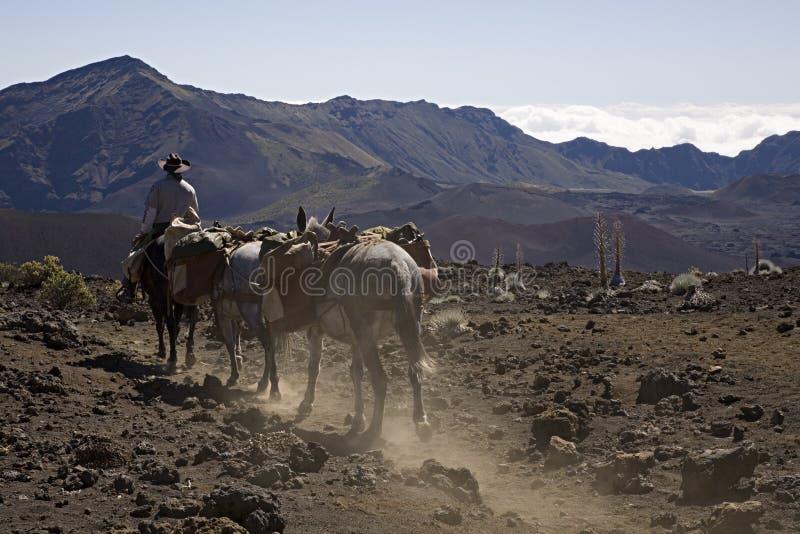 Pferdenspur lizenzfreies stockbild