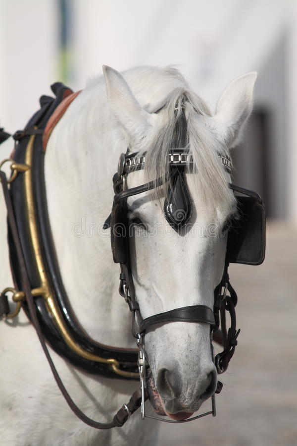 Pferdenwagen stockfoto