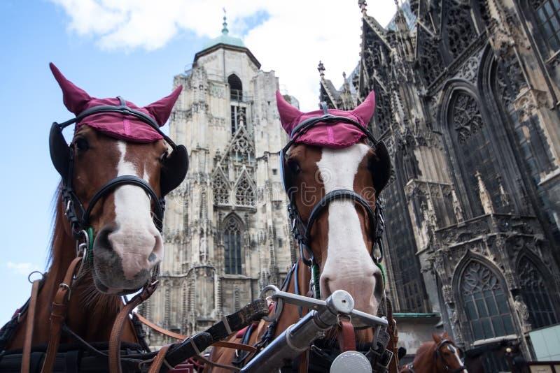 Pferdenwagen nahe Kathedrale Str.-Stephan lizenzfreie stockfotografie