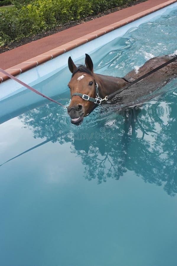Pferdenwassertraining stockbilder