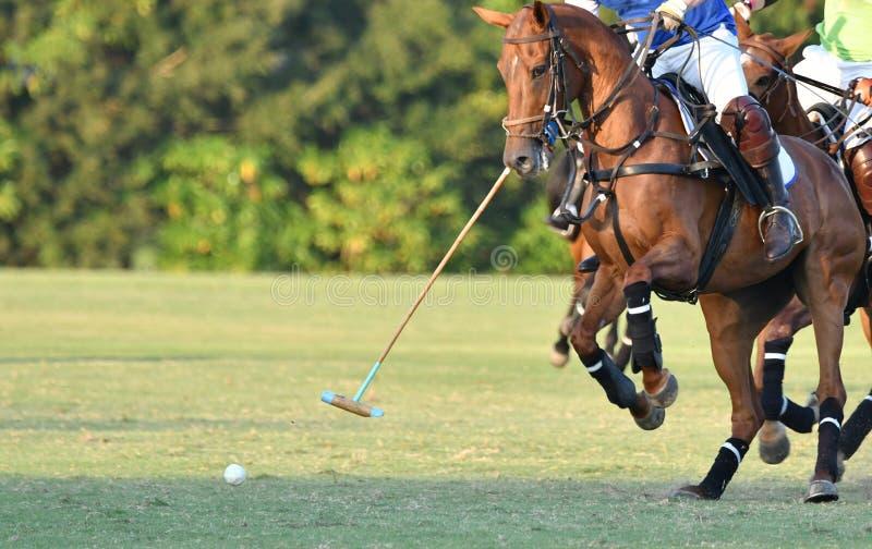 Pferdepolo stockbild