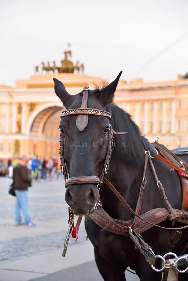 Download Pferdeportrait Auf Dem Hintergrund Des Bogens Der Hauptsitze Stockbild - Bild von tier, portrait: 106801903