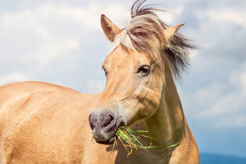 Pferdeportrait auf der Weide stockfoto