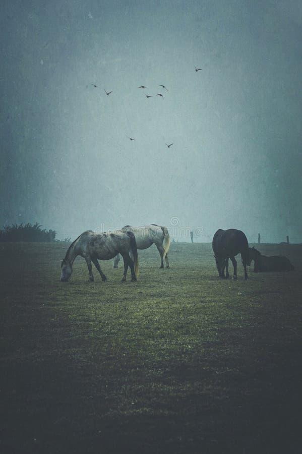 Pferdeportrait im Land stockbilder