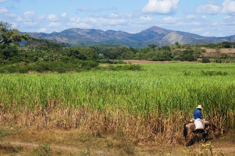 Pferdereiter in Valle de Los Ingenios, Kuba stockfoto