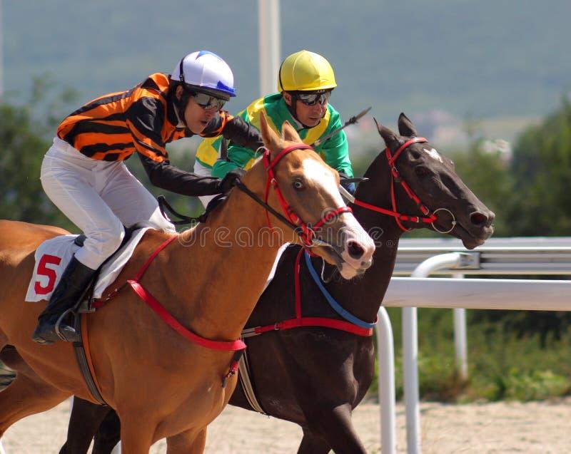 Pferderennen. stockfotos
