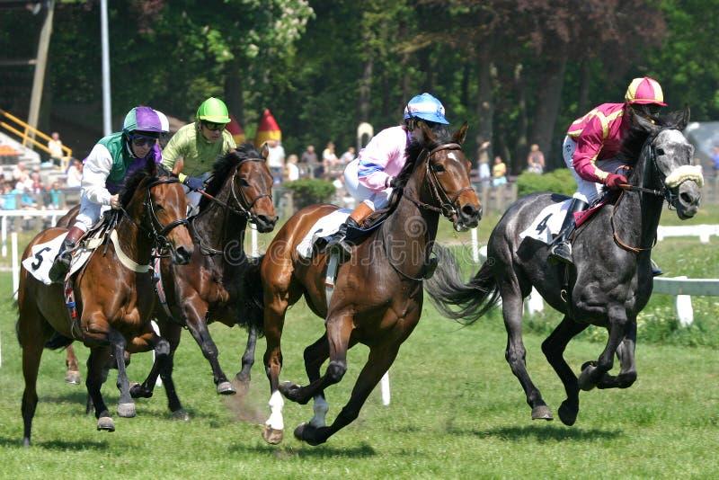 Pferderennen stockbilder