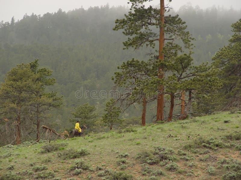Download Pferderuecken-Mitfahrer In Den Bergen Stockfoto - Bild: 48076