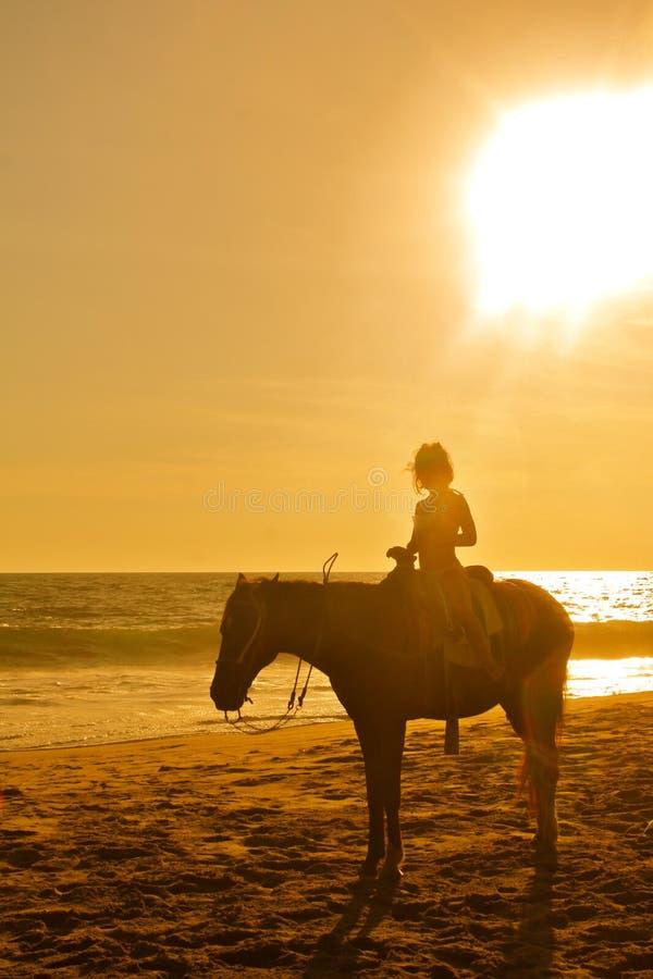 Pferderueckenreiten des jungen Mädchens auf dem Strand am Sonnenuntergang stockbilder