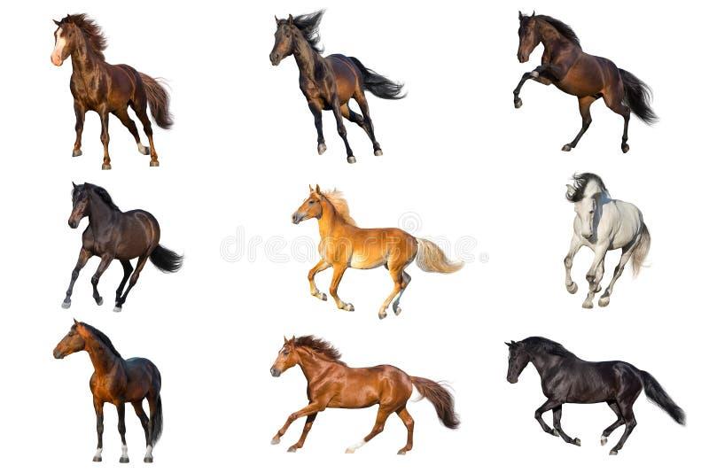 Pferdesammlung lokalisiert stockfotografie