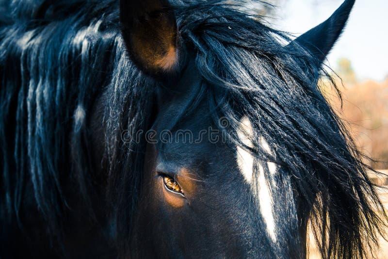 Pferdeschönheit lizenzfreies stockfoto