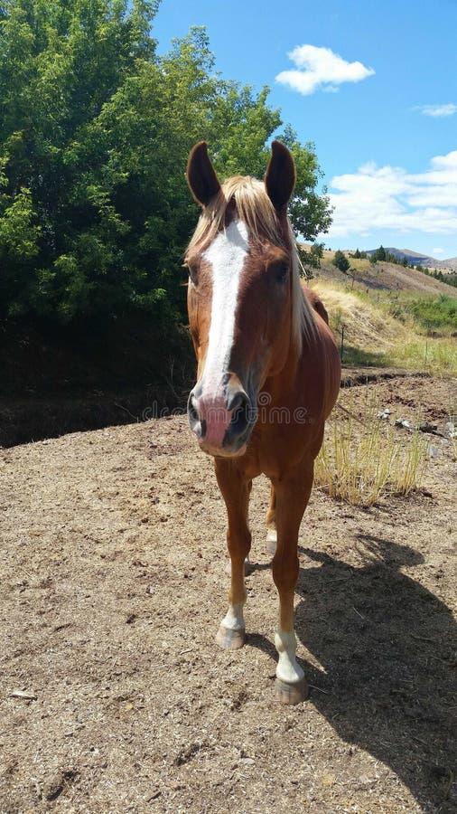 Pferdeschatten lizenzfreies stockbild
