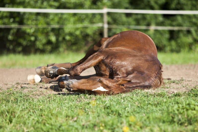 Pferdeschlaf auf Wiese lizenzfreies stockbild