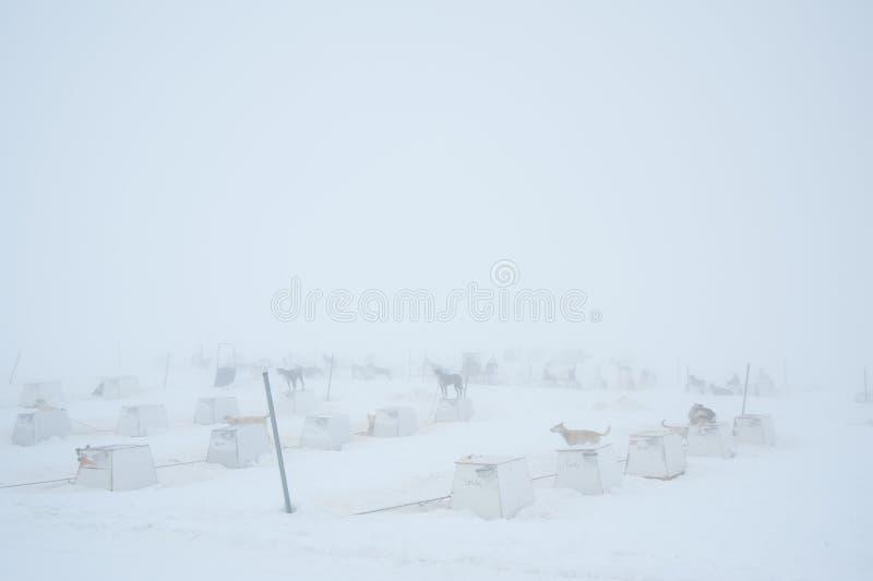 Pferdeschlittenhundelager Lizenzfreies Stockfoto