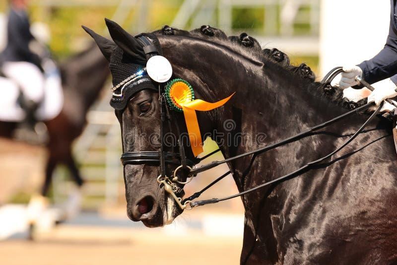 Pferdeschwarzes Porträt in mit goldenem Bogen um gewinnen! stockfotos