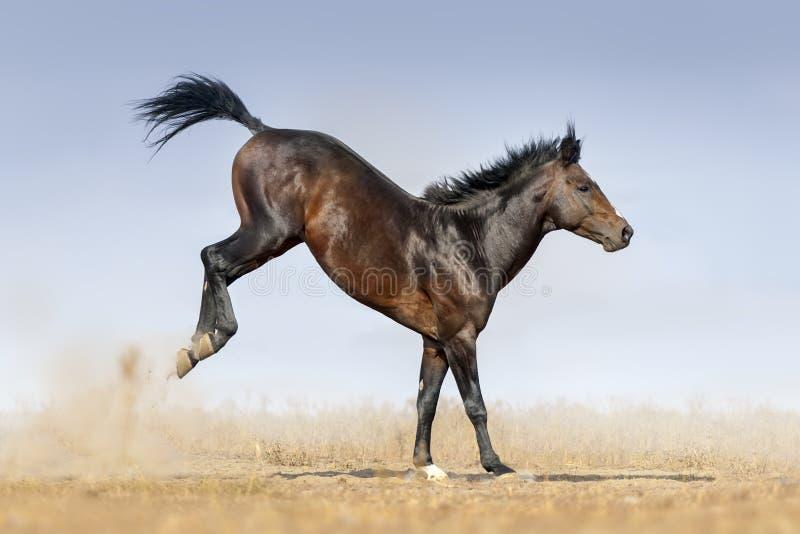 Pferdespielsprung lizenzfreie stockbilder