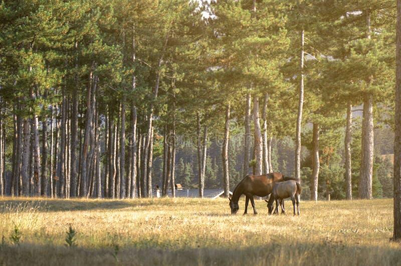 Pferdestute mit ihrem Baby stockbilder