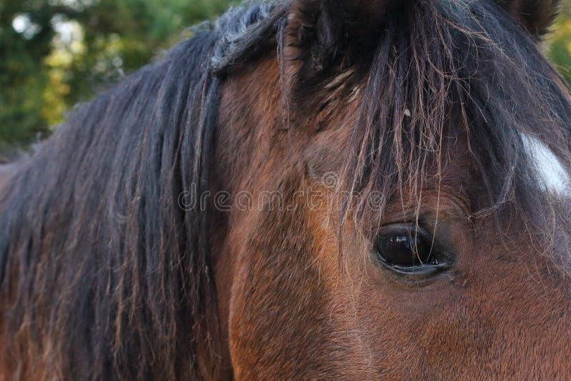 Pferdesuffolk-Herbst lizenzfreies stockbild