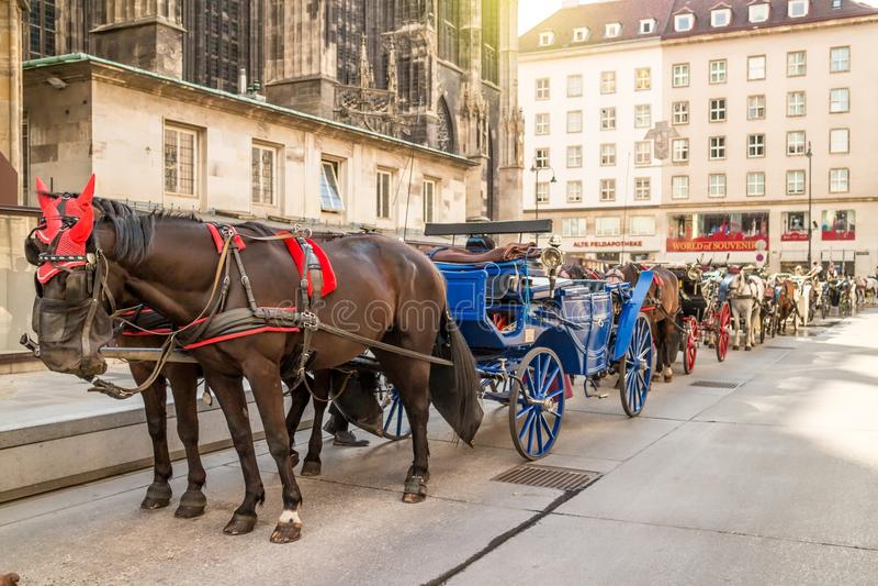 Pferdewagen in Wien lizenzfreie stockfotografie