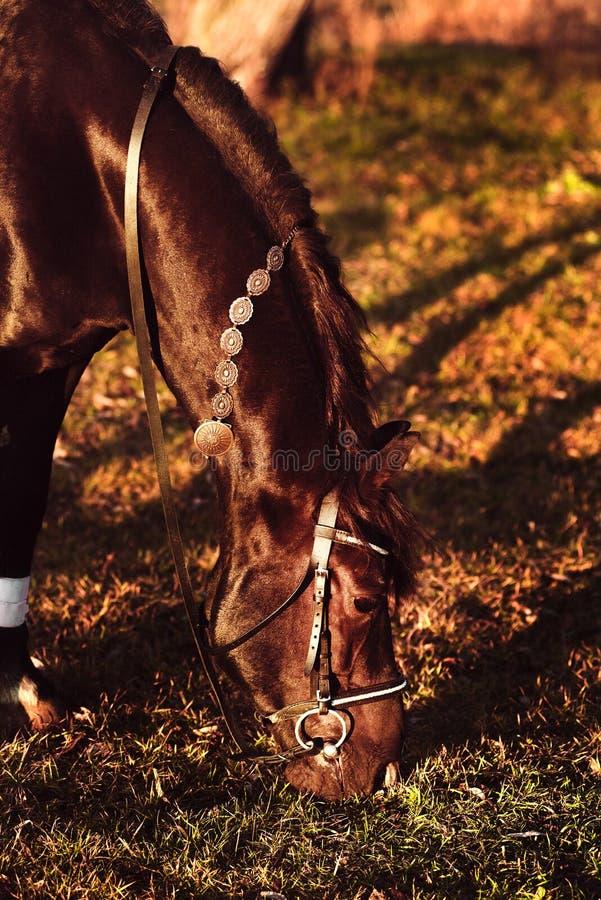 Pferdeweide bei Sonnenuntergang lizenzfreie stockfotos