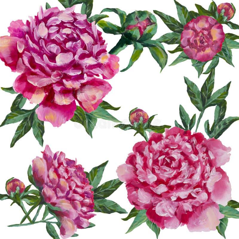 Pfingstrosen blüht - rosa Pfingstrose, Rosen mit dem grünen Blattmalen lizenzfreie abbildung