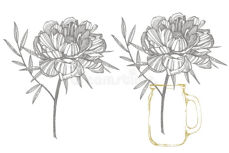 Pfingstrosenblumen- und -blattzeichnen Handgezogener gravierter Blumensatz Botanische Illustrationen Groß für Tätowierung, Einlad stock abbildung