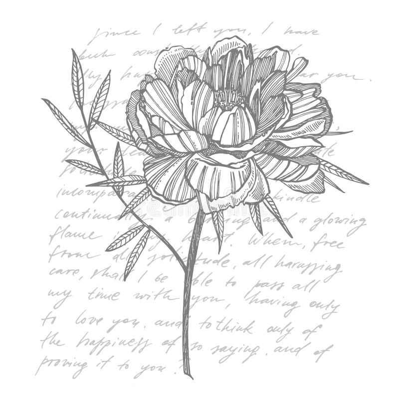 Pfingstrosenblumen- und -blattzeichnen Handgezogener gravierter Blumensatz Botanische Illustrationen Groß für Tätowierung, Einlad vektor abbildung