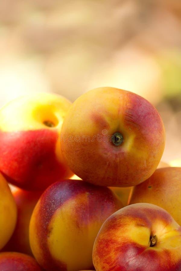 Pfirsich-Aprikosennektarine der Frucht hybride stockfotografie