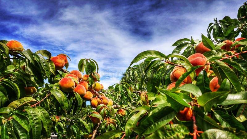 Pfirsich und blauer Himmel lizenzfreie stockfotos