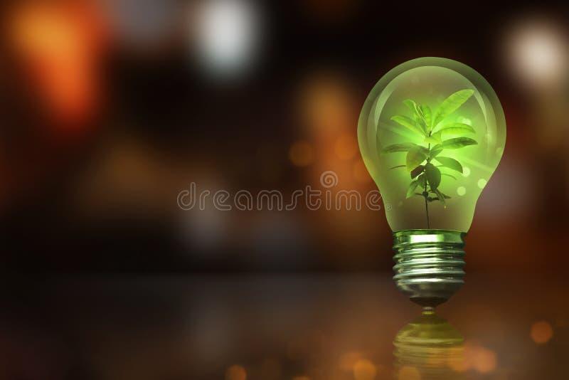 Pflänzchen innerhalb der Glühlampe mit unscharfem Licht stockfotos