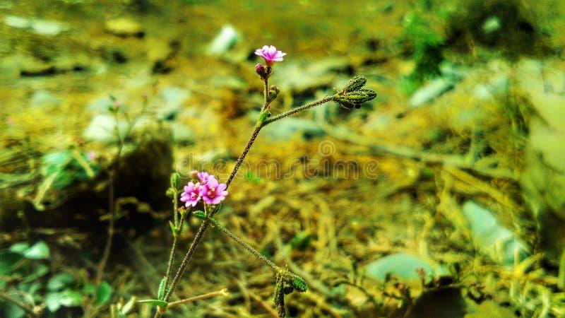 Pflänzchen mit Miniblumen lizenzfreies stockbild