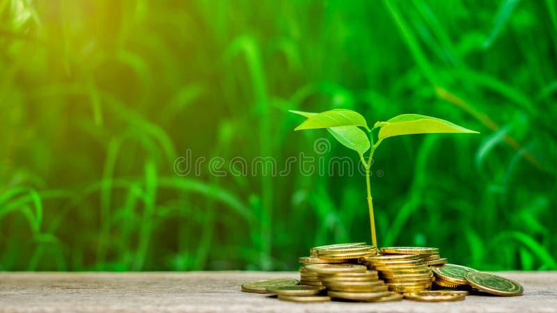 Pflänzchen wächst auf Stapel goldenen Münzen im Garten heran - Konzept des Investitionseigentums stockfotografie