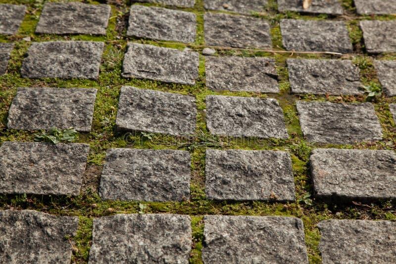 Pflänzchen wachsen zwischen gepflasterten quadratischen Granitsteinwegen Hintergrund der Draufsicht der Pflasterung lizenzfreies stockbild