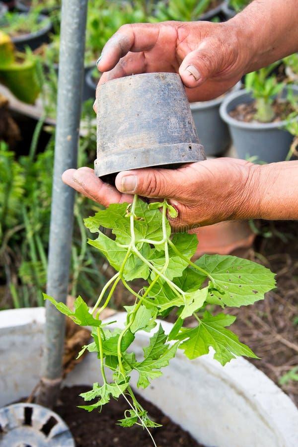Pflanzen lizenzfreie stockfotografie
